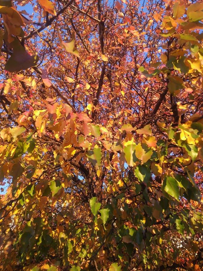 Beautiful fall royalty free stock photography