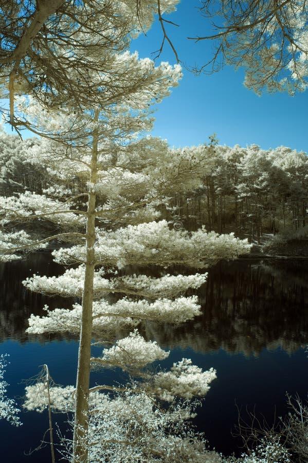 Beautiful false color surreal infrared landscape image of lake a royalty free stock image