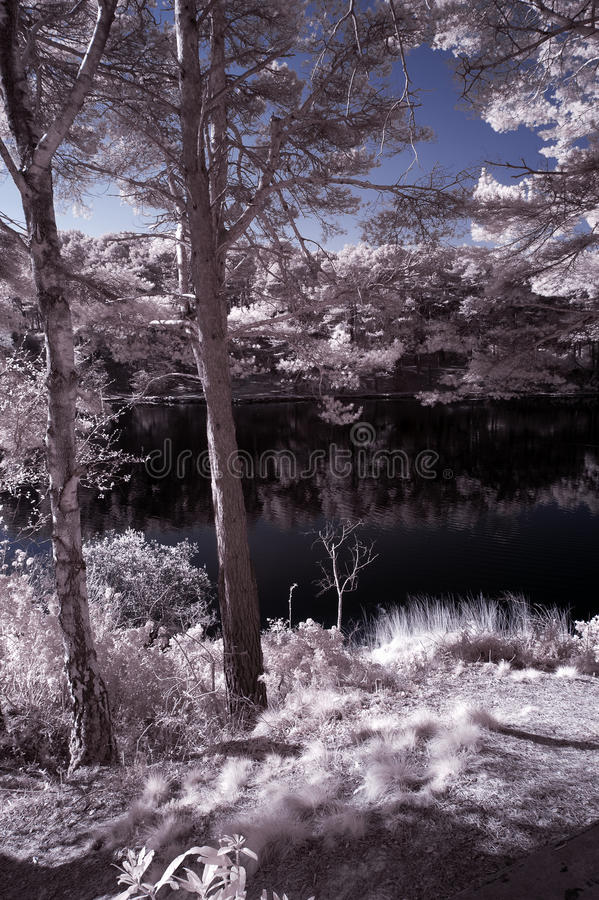 Beautiful false color surreal infrared landscape image of lake a stock images