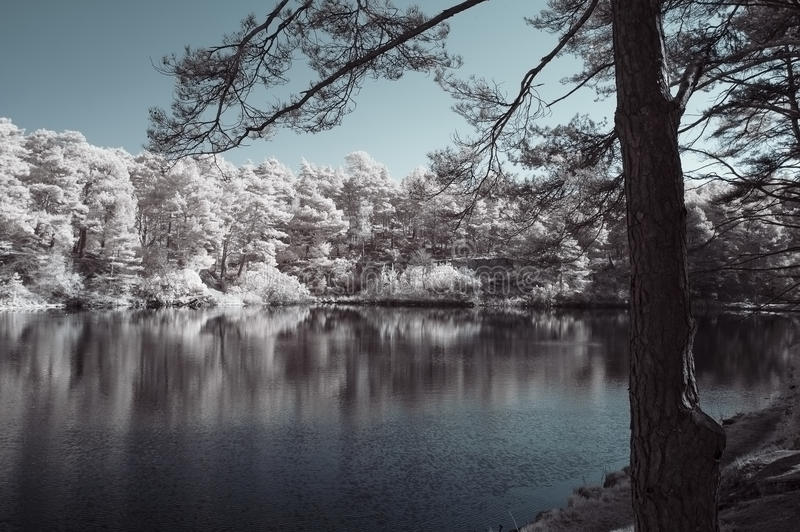 Beautiful false color surreal infrared landscape image of lake a royalty free stock images