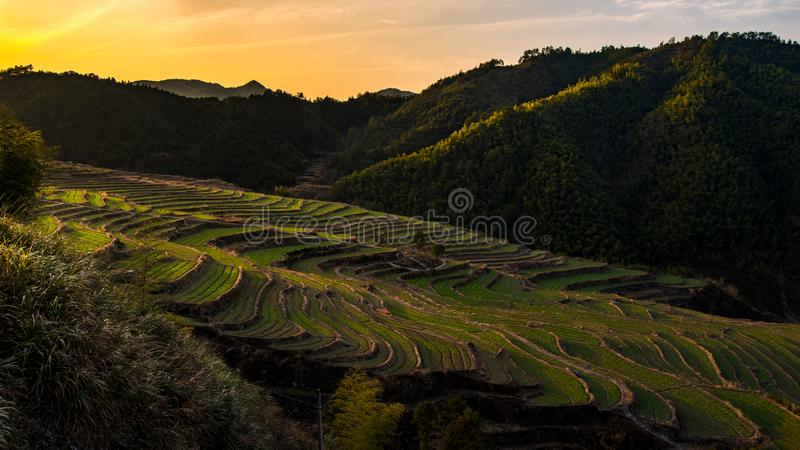 Chinese farm terraces at sunset stock image