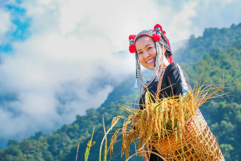 Beautiful farmer girl with straw in rice fields in northern Thailand royalty free stock photos