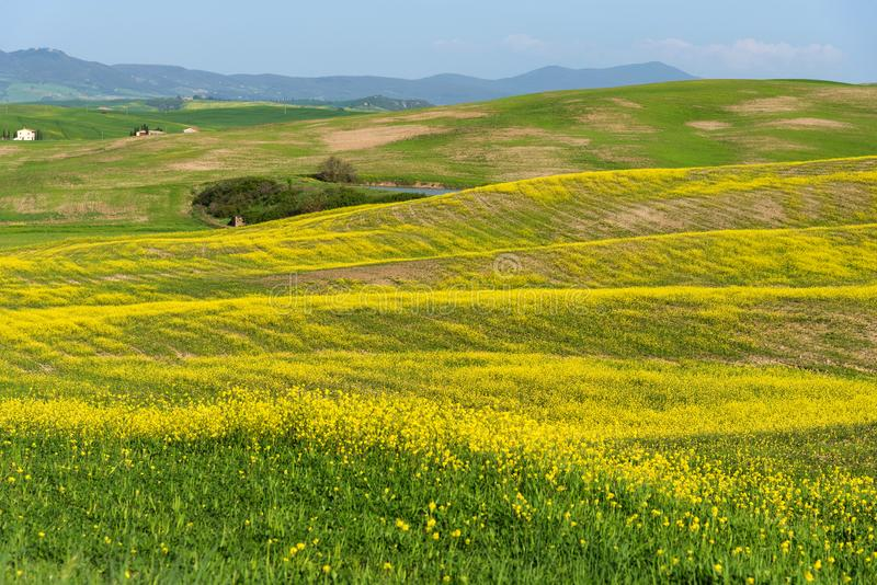 Beautiful farmland rural landscape, colorful spring flowers in Tuscany, Italy royalty free stock photography