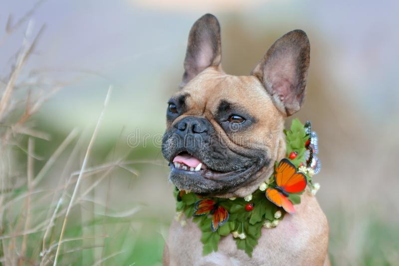 Beautiful fawn and black mask female French Bulldog dog with a self made leaf and butterfly collar in front of blurry background stock photography
