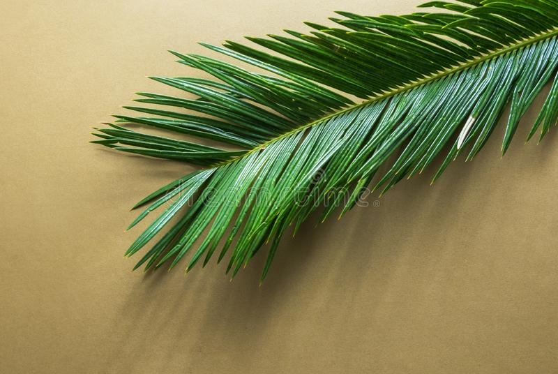 Beautiful feathery green palm leaf on light brown beige wall background. Sunlight harsh shadows. Summer tropical creative concept royalty free stock image