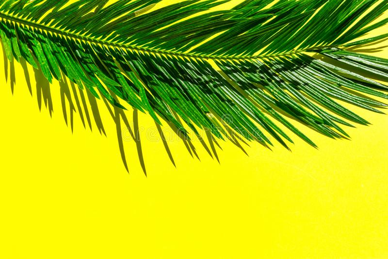 Beautiful feathery green palm leaf on vibrant yellow wall background. Summer tropical creative concept. Urban jungle houseplants royalty free stock image