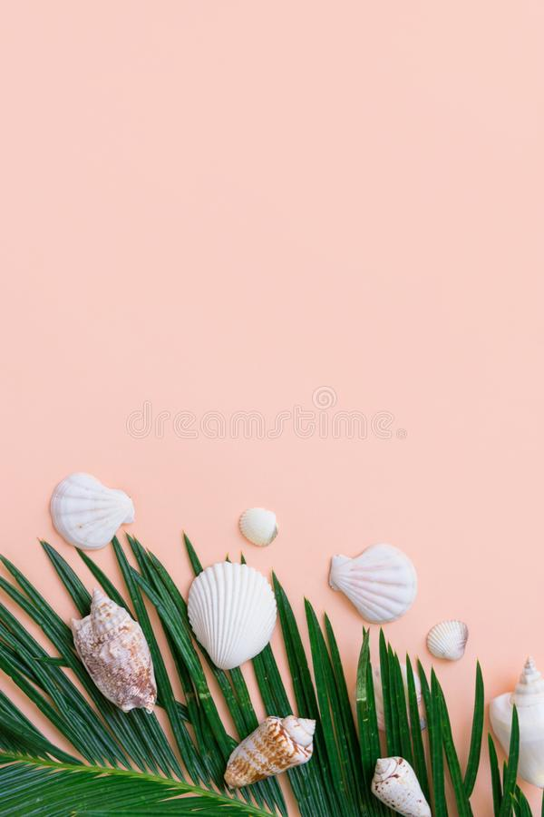 Beautiful feathery green palm leaf white sea shells on pastel pink wall background. Summer tropical nautical creative concept royalty free stock image