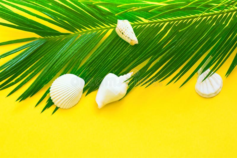 Beautiful feathery green palm leaf white sea shells on yellow wall background. Summer tropical nautical creative concept stock image