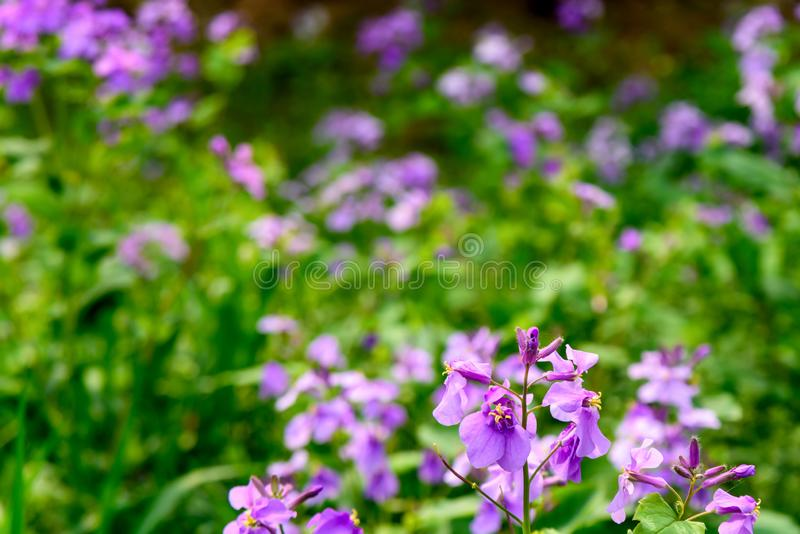 February orchid royalty free stock photography