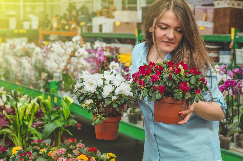 Beautiful female customer smelling colorful blooming flowerpots in the retail store. Gardening In Greenhouse. Botanical garden, flower farming, horticultural stock image