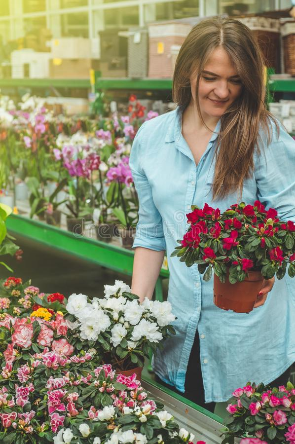 Beautiful female customer smelling colorful blooming flowerpots in the retail store. Gardening In Greenhouse. Botanical garden, flower farming, horticultural royalty free stock photos
