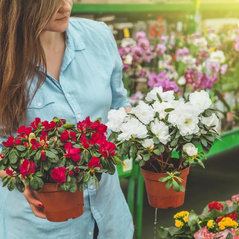 Beautiful female customer smelling colorful blooming flowerpots in the retail store. Gardening In Greenhouse. Botanical garden, flower farming, horticultural royalty free stock images