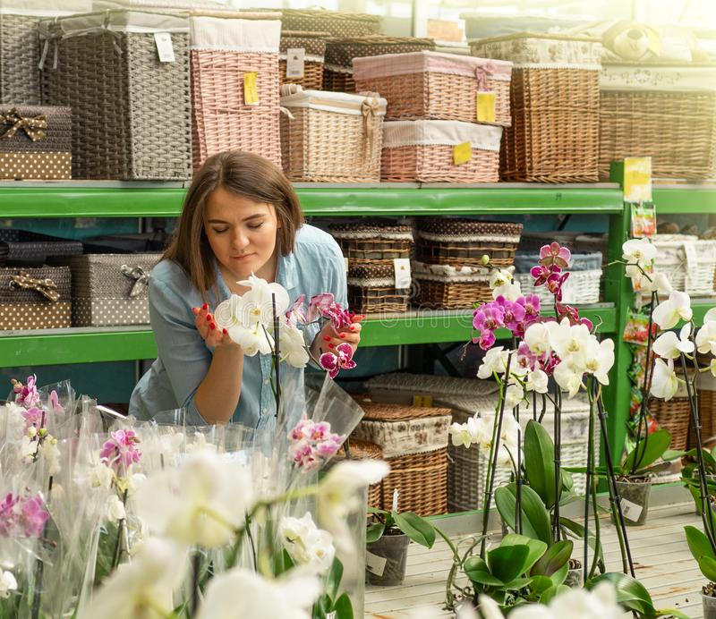 Beautiful female customer smelling colorful blooming orchids in the retail store. Gardening In Greenhouse. Botanical garden, flower farming, horticultural stock image