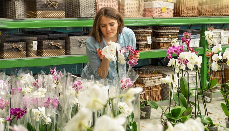 Beautiful female customer smelling colorful blooming orchids in the retail store. Gardening In Greenhouse. Botanical garden, flower farming, horticultural stock photos