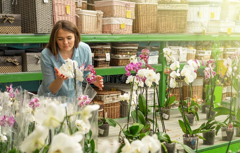 Beautiful female customer smelling colorful blooming orchids in the retail store. Gardening In Greenhouse. Botanical garden, flower farming, horticultural royalty free stock images