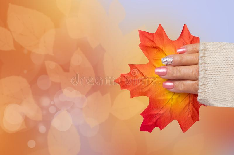 Beautiful female hand with autumn nail design. Hand with a elegant pink nail manicure holding a red maple sheet in front of a abs stock images