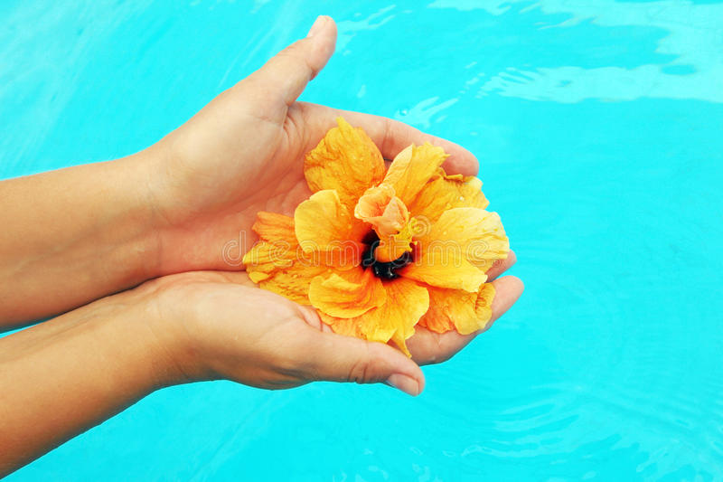Beautiful female hands in the pool royalty free stock photography