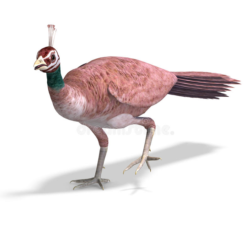 Free Beautiful Female Peahen Or Peacock. 3D Rendering Stock Photo - 14457070