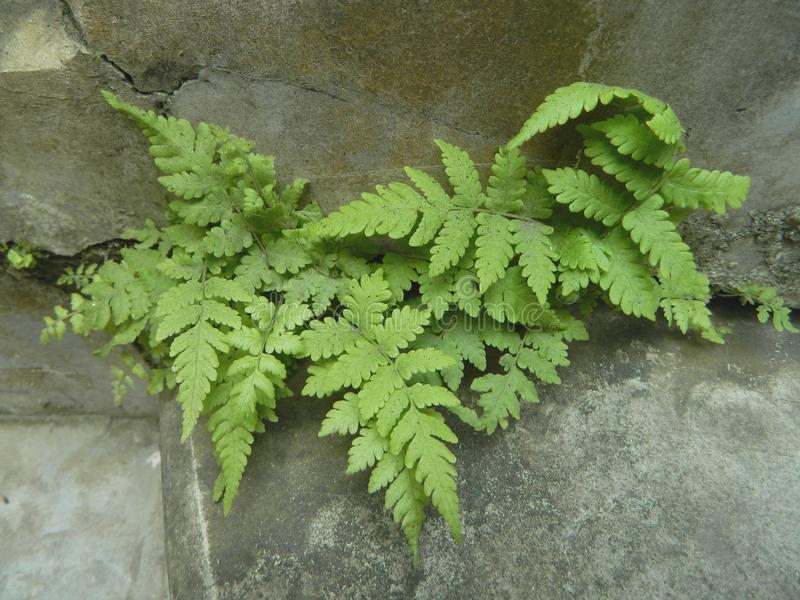 Beautiful fern plants with fresh green leaves stock photos