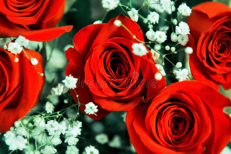 Beautiful festive bouquet of bright red roses stock photos