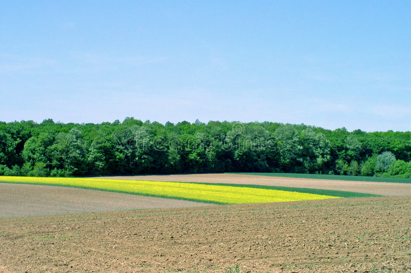Beautiful field stock images