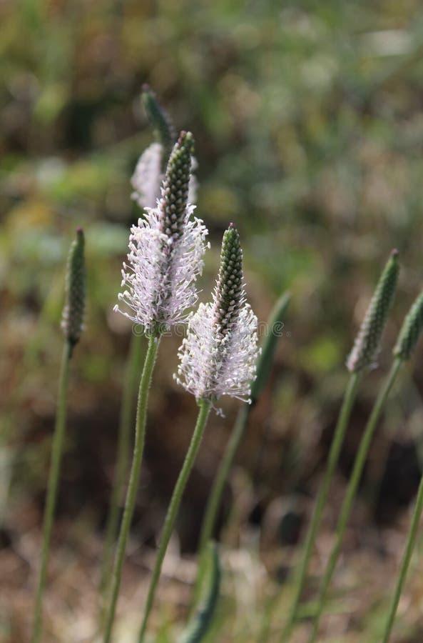 A beautiful field flower royalty free stock photo
