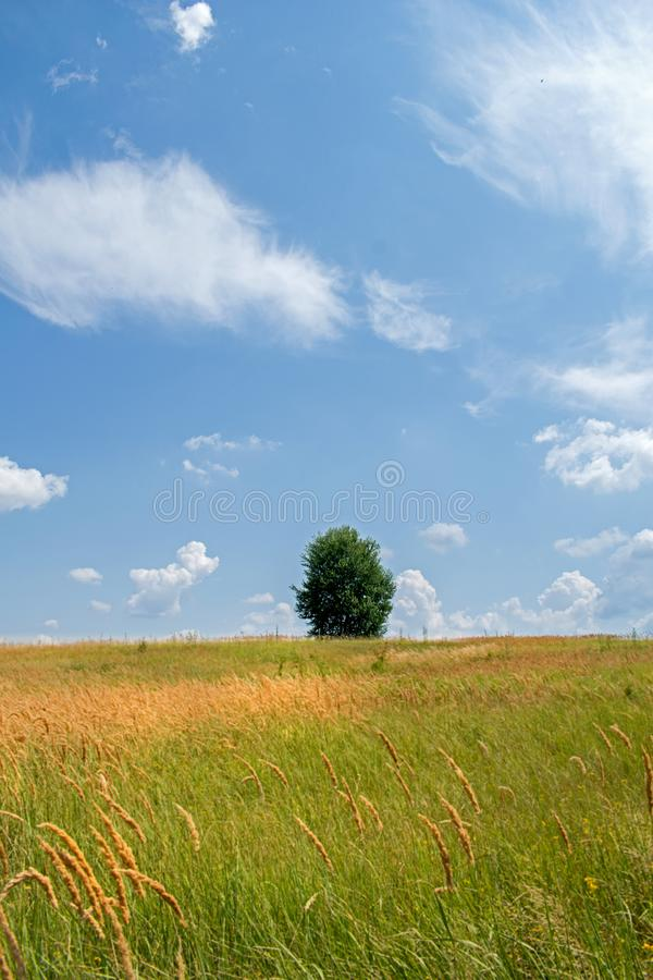 A beautiful field with many plants, green grass, wild flowers and a solitary tree. A beautiful sky with many white, fluffy clouds stock photo