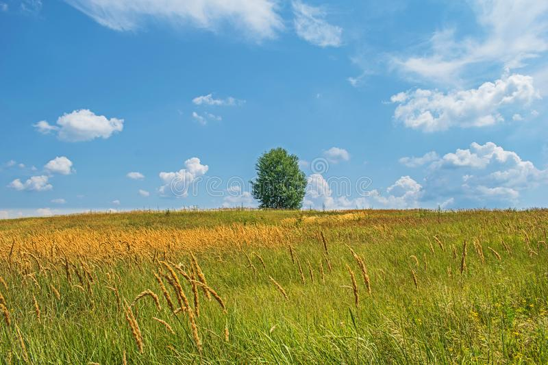 A beautiful field with many plants, green grass, wild flowers and a solitary tree. A beautiful sky with many white, fluffy clouds royalty free stock photography