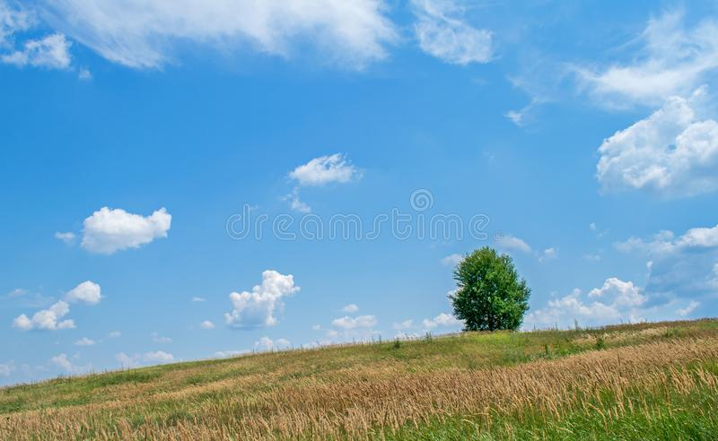 A beautiful field with many plants, green grass, wild flowers and a solitary tree. A beautiful sky with many white, fluffy clouds royalty free stock images
