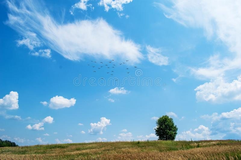 A beautiful field with many plants, green grass, wild flowers and a solitary tree. A beautiful sky with many white, fluffy clouds stock images