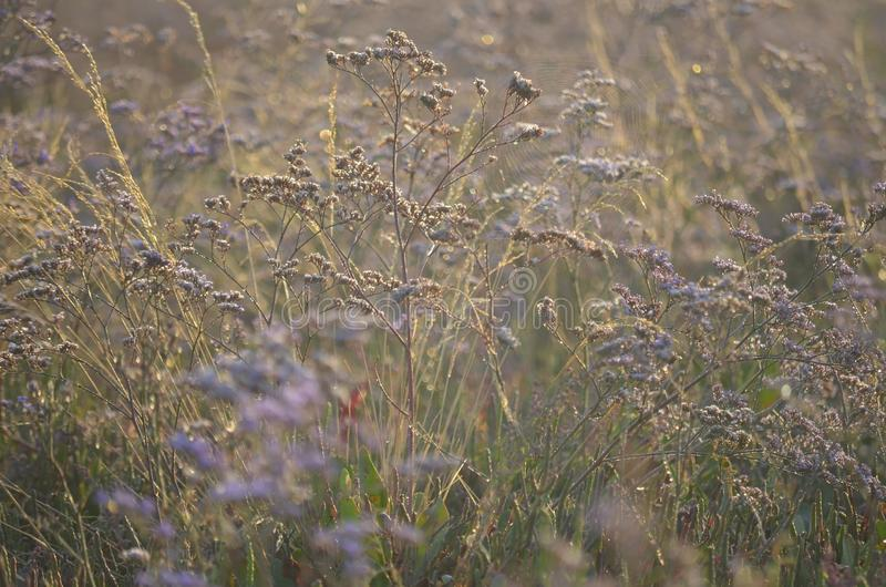 Wild meadow flowers in the sunlight stock image
