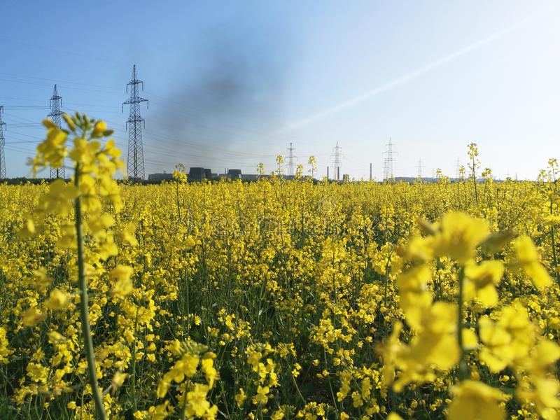 Beautiful field with yellow flowers on the background of a metallurgical plant. Beautiful field with yellow flowers on the royalty free stock image