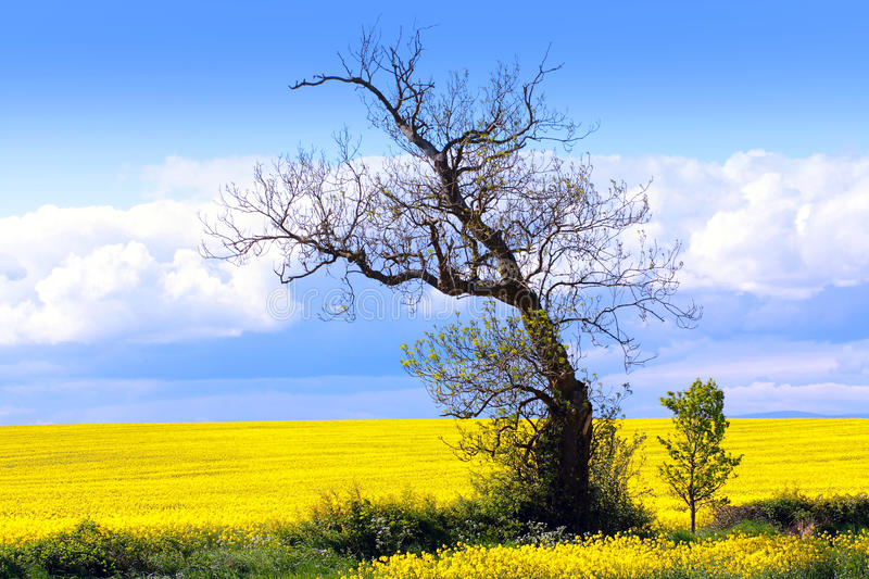 Beautiful fields of in Springtime royalty free stock photos