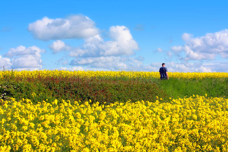 Download Beautiful Fields Of In Springtime Stock Image - Image: 25178363