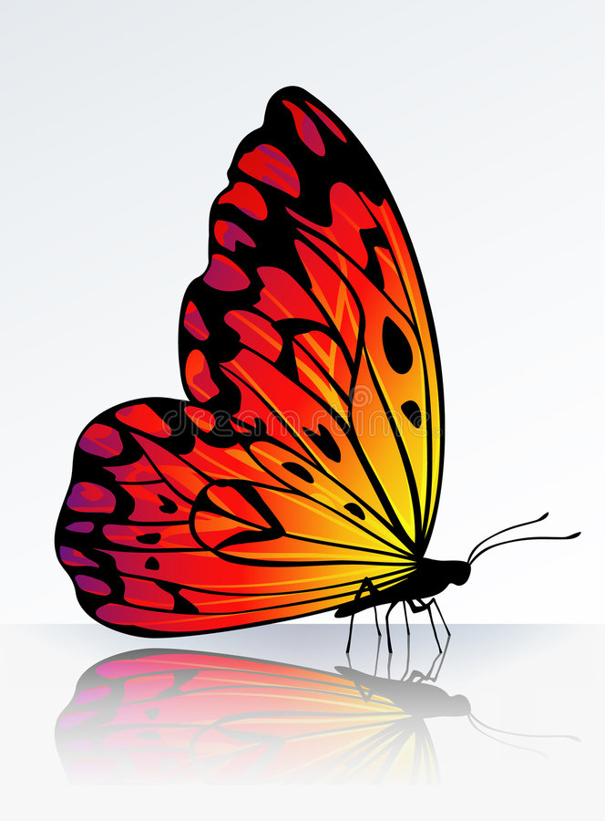 Beautiful fire-colored butterfly stock illustration