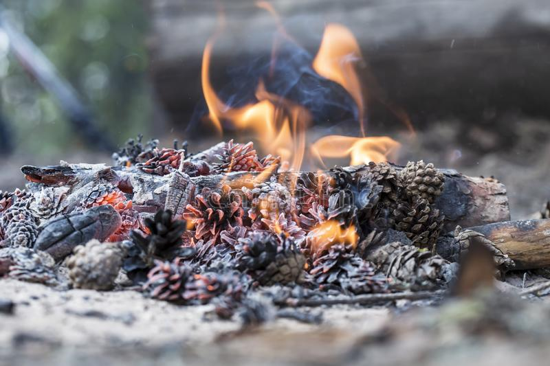 Beautiful fire made of wood and pine cones, with a small flame, on a blurred background, on a summer sunny day stock photography