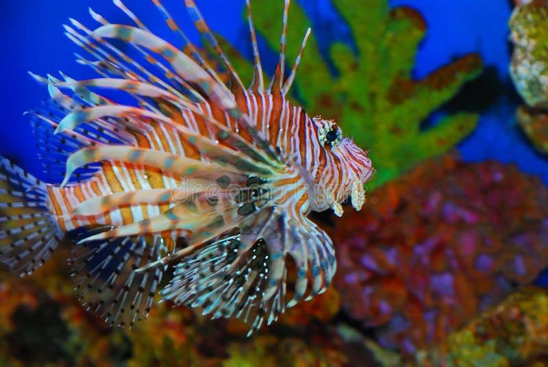 Beautiful fish stock photography