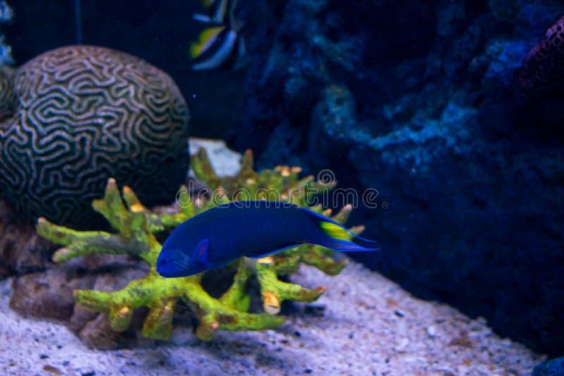 Beautiful fish in the aquarium on decoration of aquatic plants b stock image