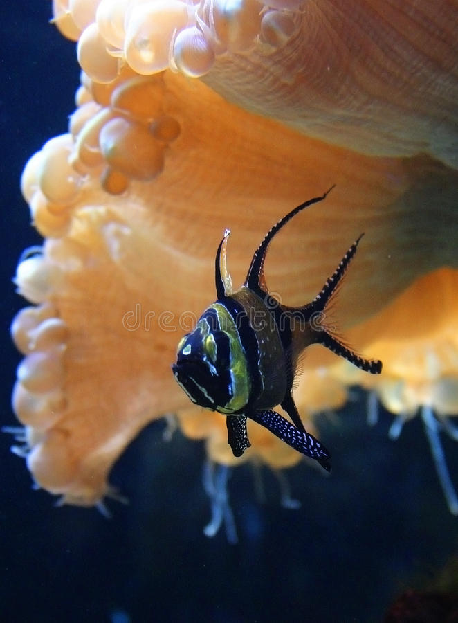 Beautiful fish in a marine aquarium stock image