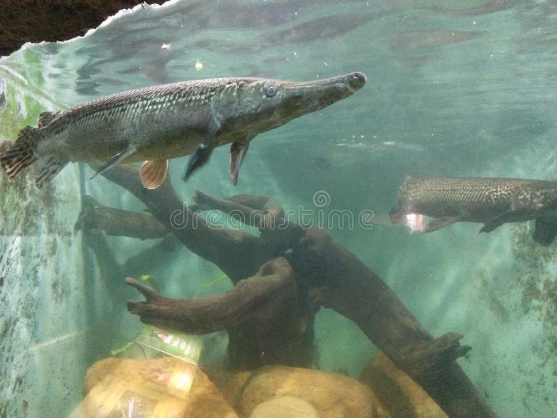 Beautiful Fishes In Srilankan National Zoo in Dehiwala stock photography