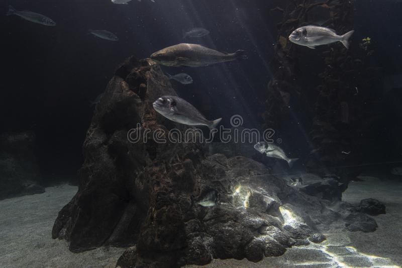 Beautiful fishes in the water royalty free stock image