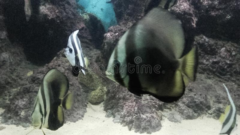 The beautiful fishes in the world royalty free stock images