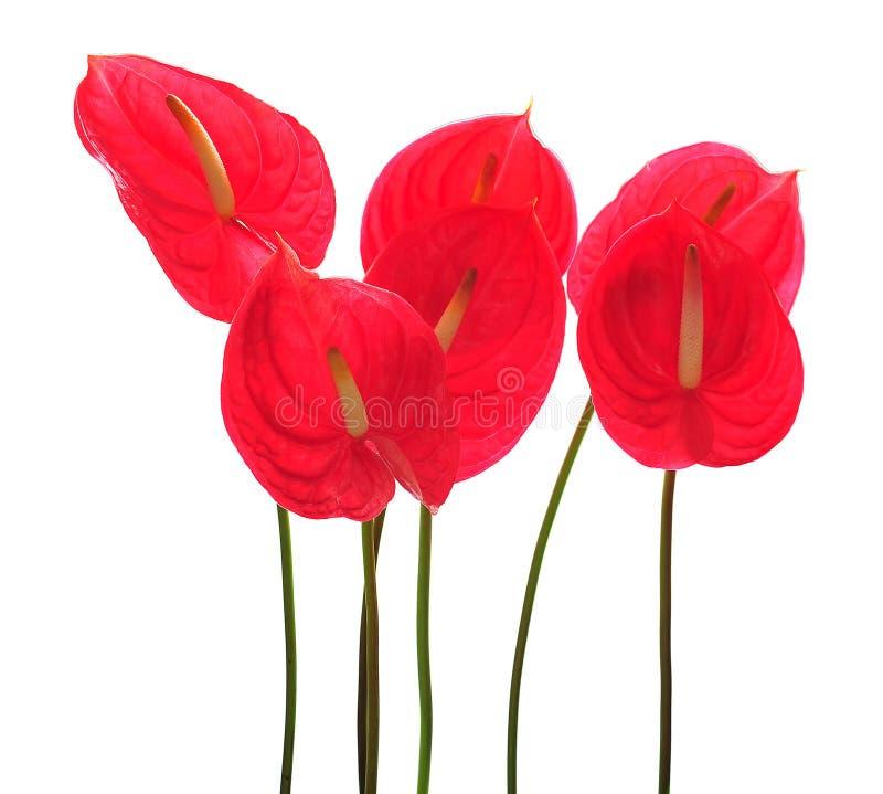 Download Beautiful Flamingos stock photo. Image of arrangement - 10785072