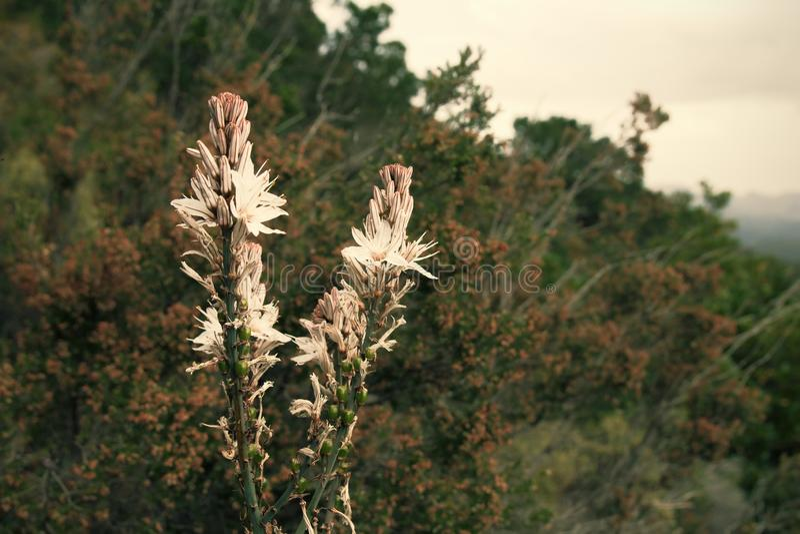 Beautiful flora growing on the hillside of Sardinia island, Italy. stock photos