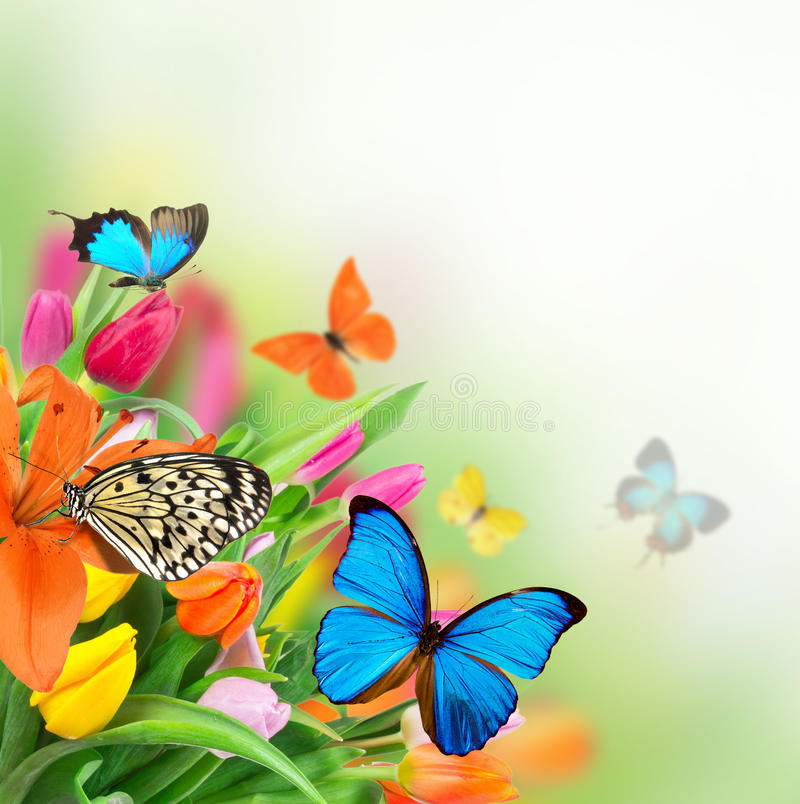 Download Beautiful Floral Background Stock Image - Image: 29023637