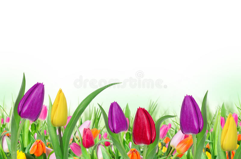 Download Beautiful Floral Background Stock Photo - Image: 29024336
