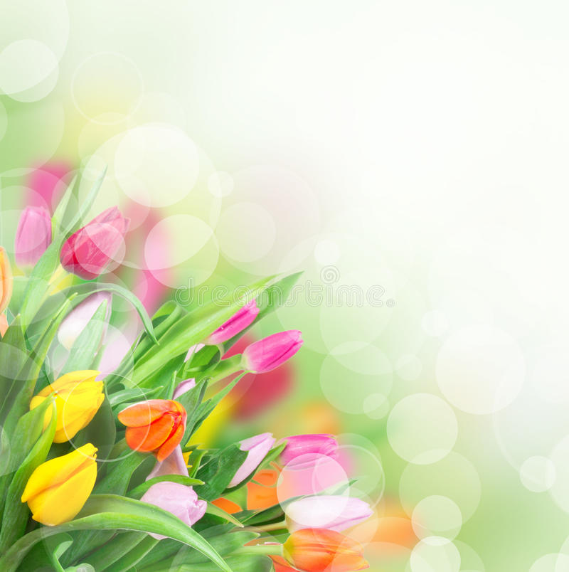 Download Beautiful Floral Background Stock Photo - Image: 29024346