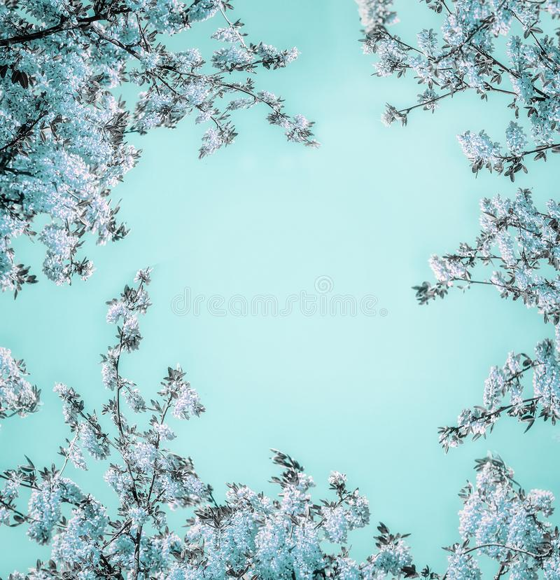 Beautiful floral background with blue blossom on light turquoise, frame. royalty free stock images