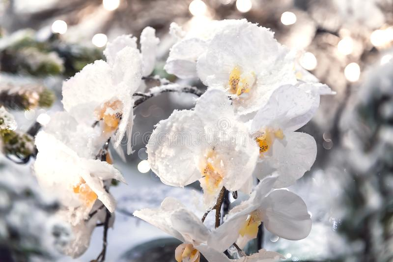 Beautiful floral background with delicate white artificial orchid powdered with snow and hoarfrost royalty free stock images