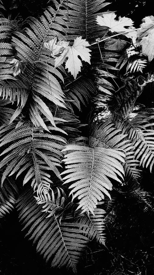 BW Beautiful floral background of green foliage leaves fern and grape. Beautiful floral background of green foliage leaves natural floral background of fern and royalty free stock image
